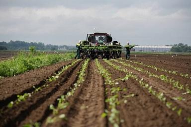 Яровой сев в России превысил 50 млн га