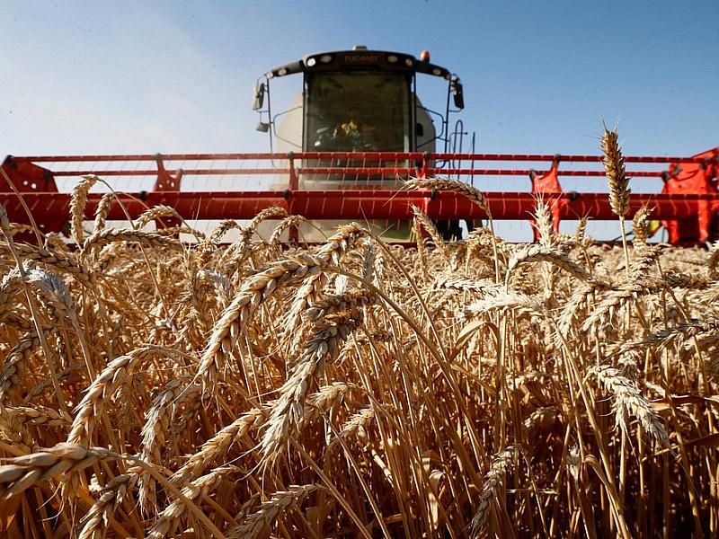Кубанские аграрии собрали первые 1,5 миллиона тонн зерна