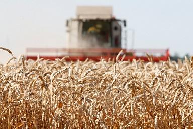 В России собрано более 95 млн тонн зерна